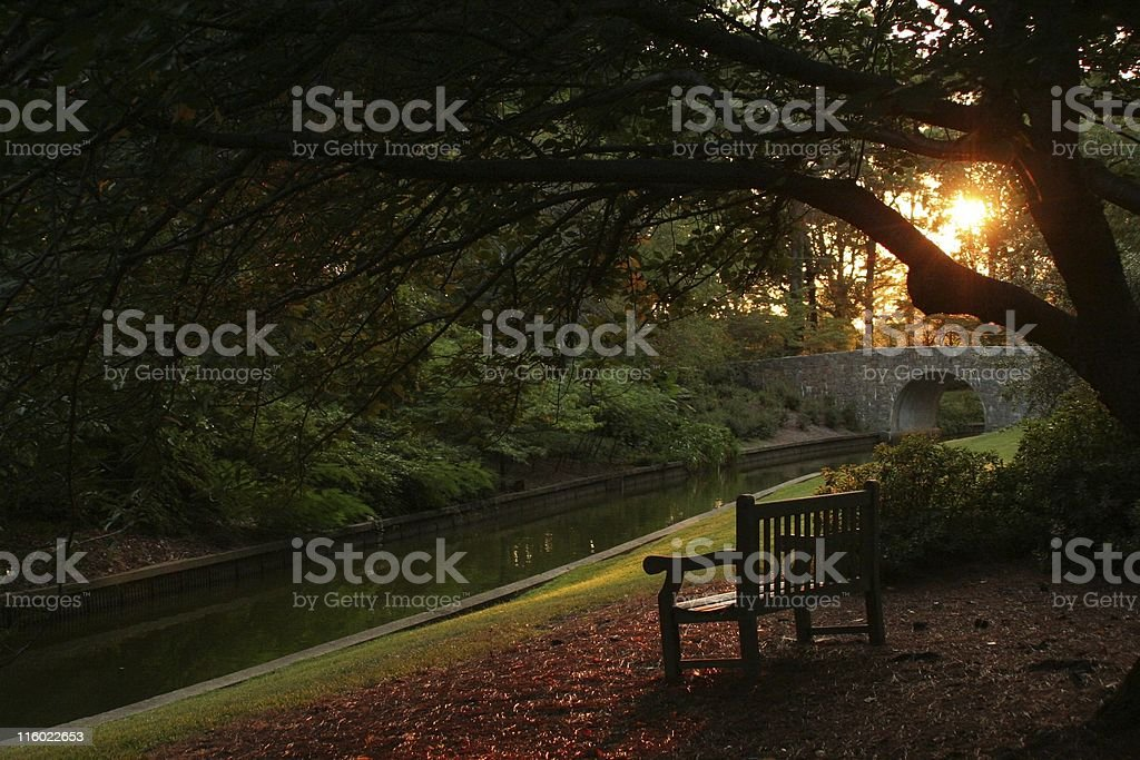 Peaceful bench in botanical gardens stock photo
