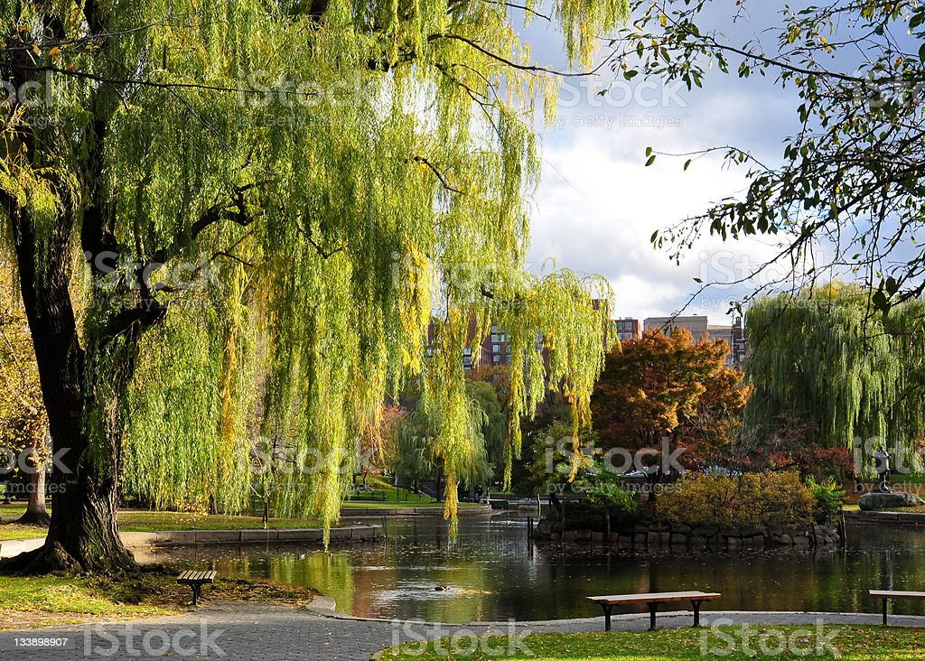 peaceful boston central park in autumn royalty-free stock photo
