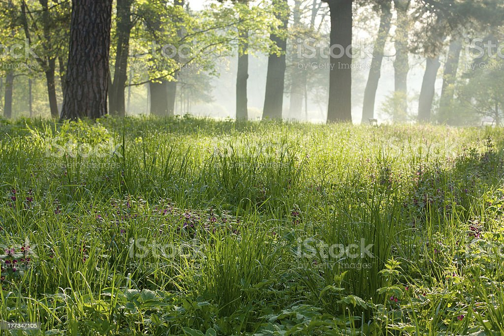 Peaceful foggy morning in the park stock photo