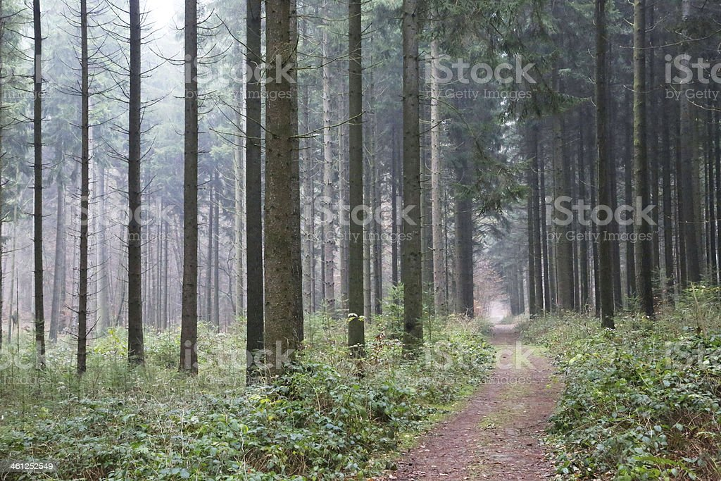 Peaceful forest royalty-free stock photo