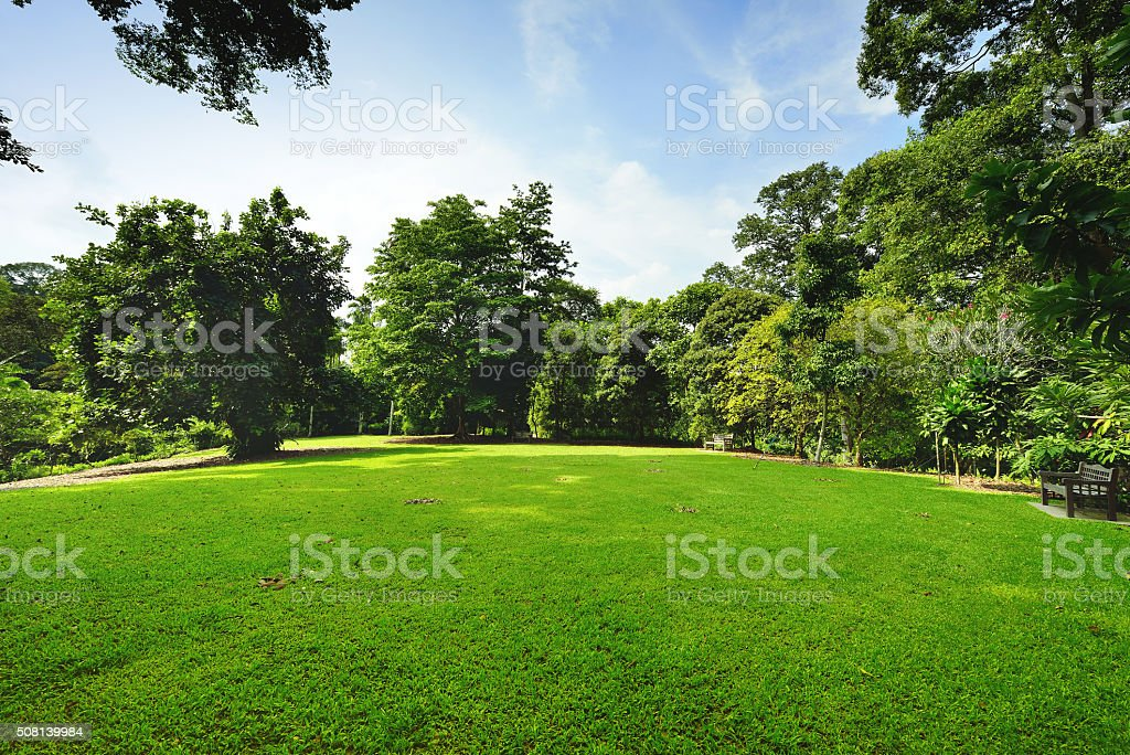 Peaceful Green Garden stock photo