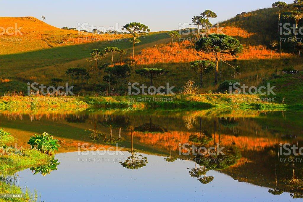 Peaceful lake reflection sunrise, araucarias, pampa countryside landscape, southern Brazil stock photo