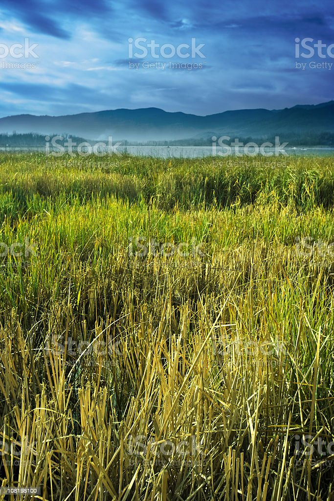 Peaceful landscape royalty-free stock photo