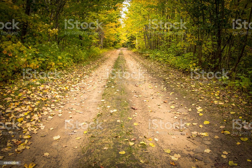 Peaceful Lane Leads Through The Autumn Forest stock photo
