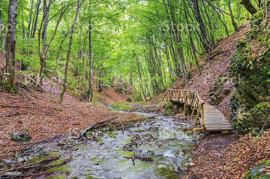peaceful little wooden bridge near deep forrest stream royalty-free stock photo