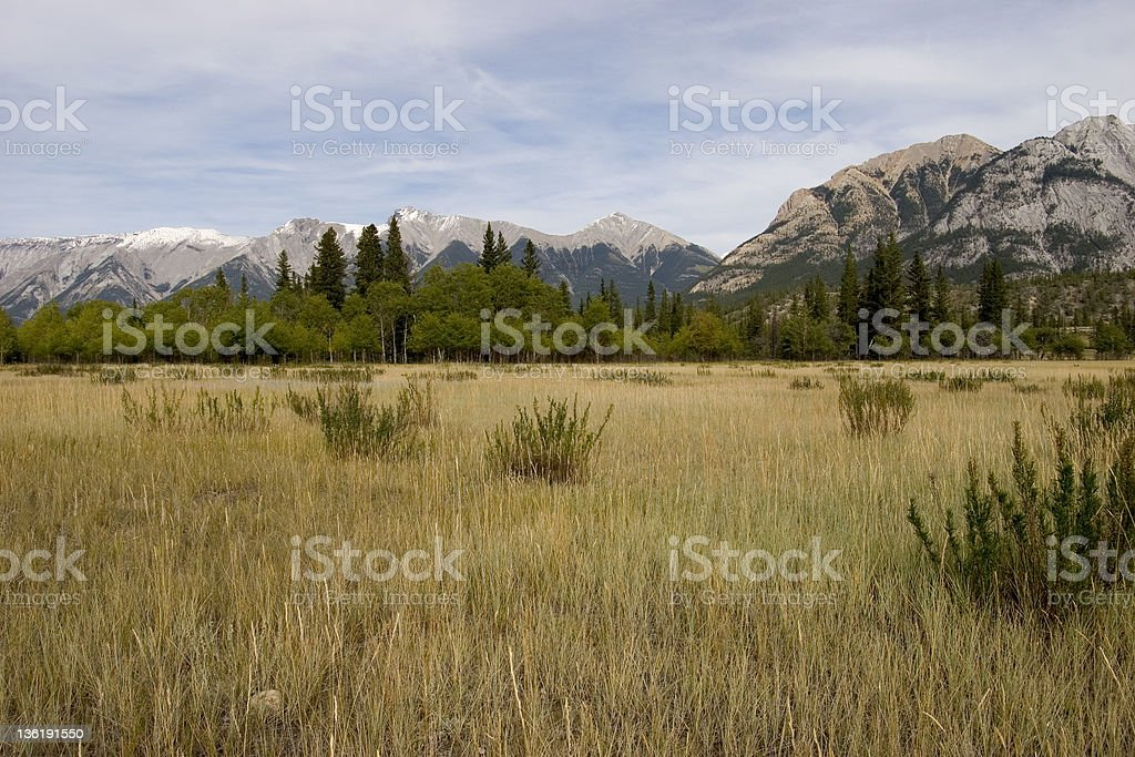 Peaceful Meadow stock photo