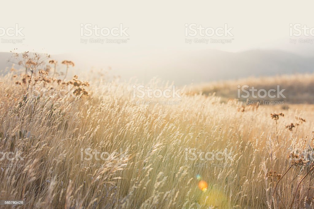 Peaceful Mountain Meadow stock photo