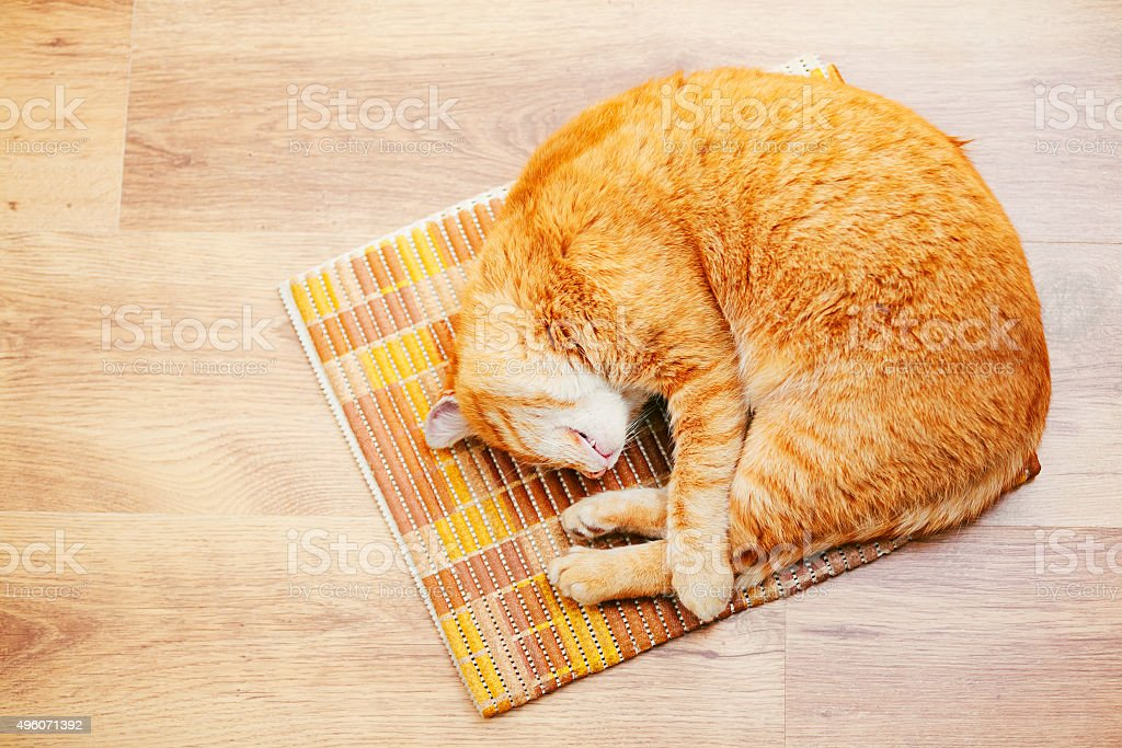 Peaceful Red Tabby Cat Male Kitten Sleeping In His Bed stock photo