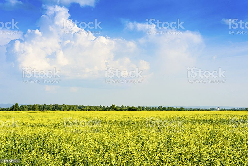 Peaceful rural landscape royalty-free stock photo