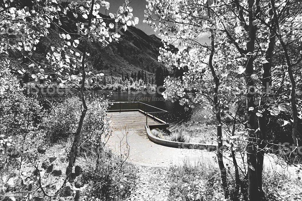 Peacefull walkway.// infrared// stock photo