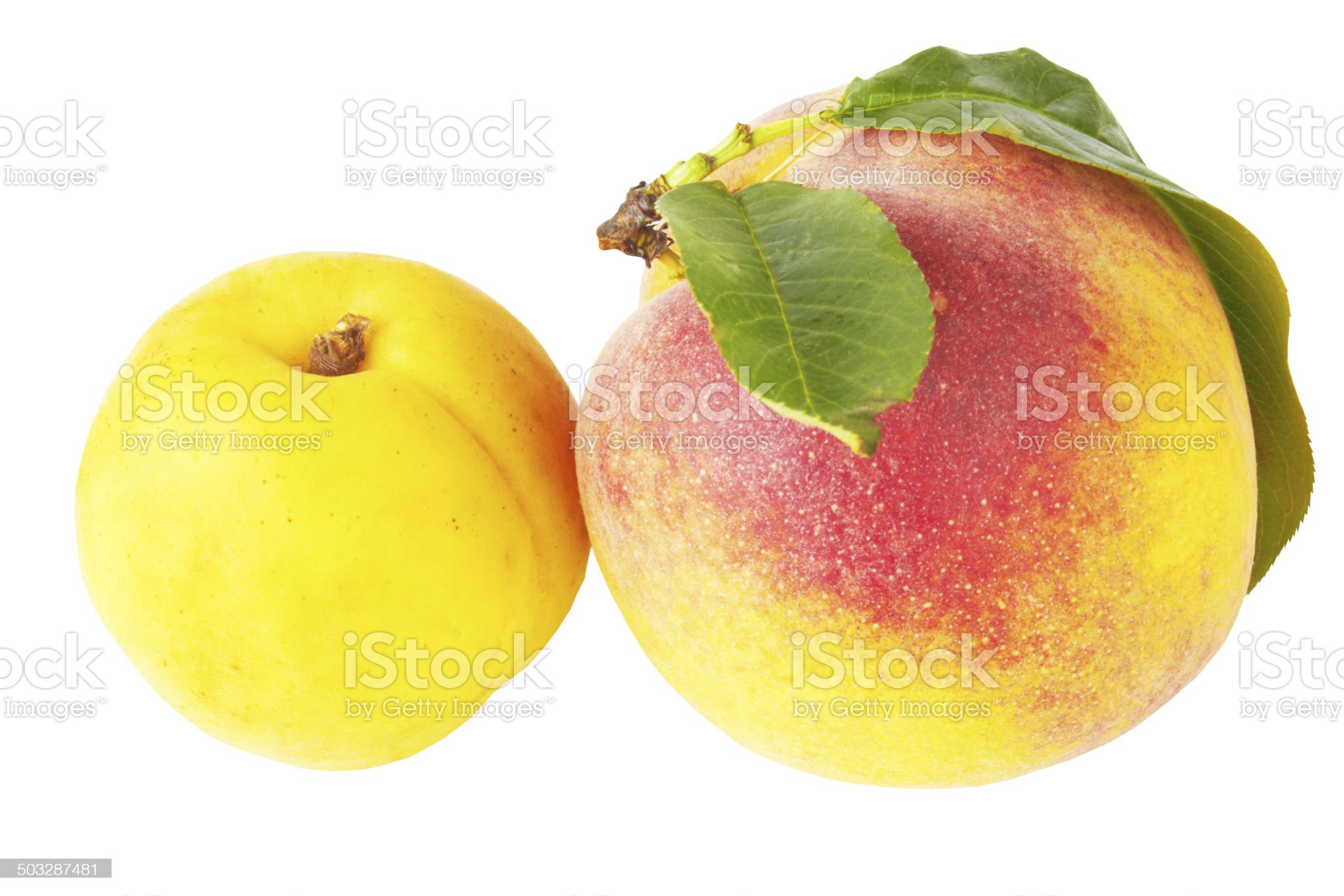 peach and apricot royalty-free stock photo