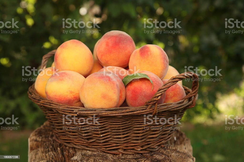 Peach Basket royalty-free stock photo