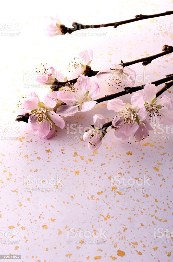 Peach blossom stock photo