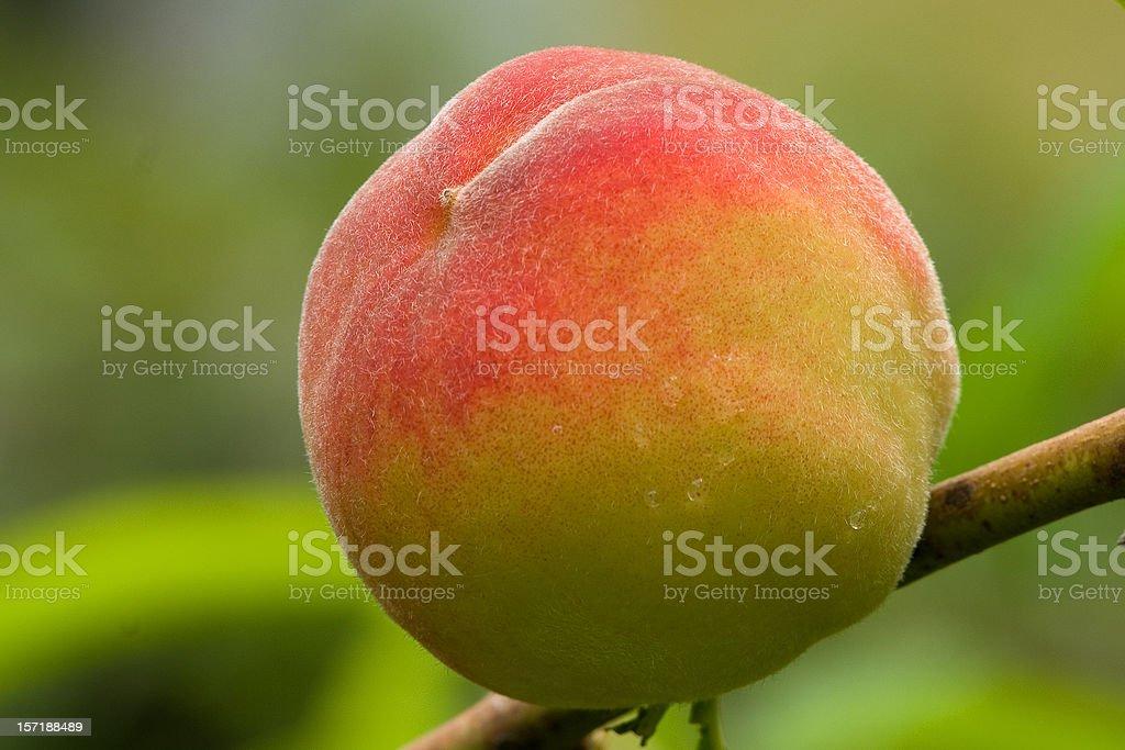 Peach royalty-free stock photo