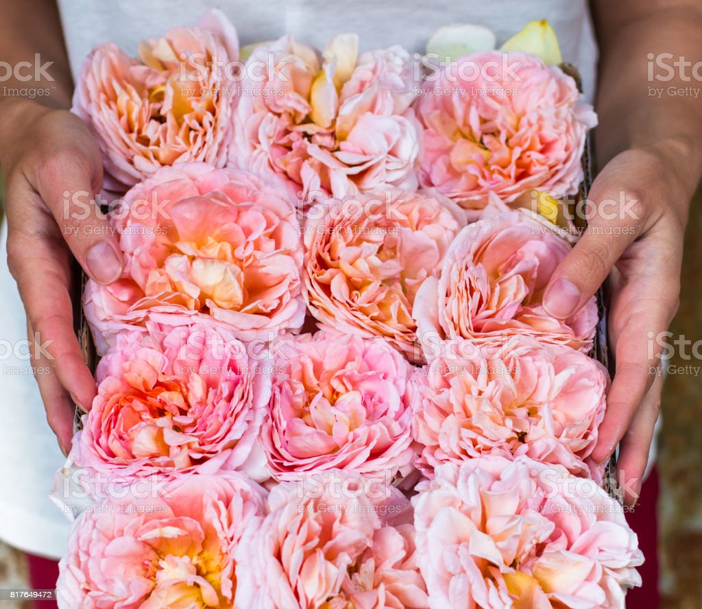peach pink roses box delivery flowers gift gardener