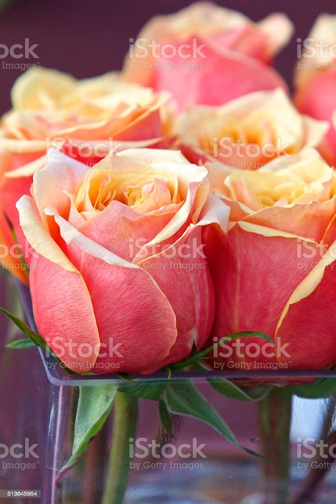 Roses pêche photo libre de droits
