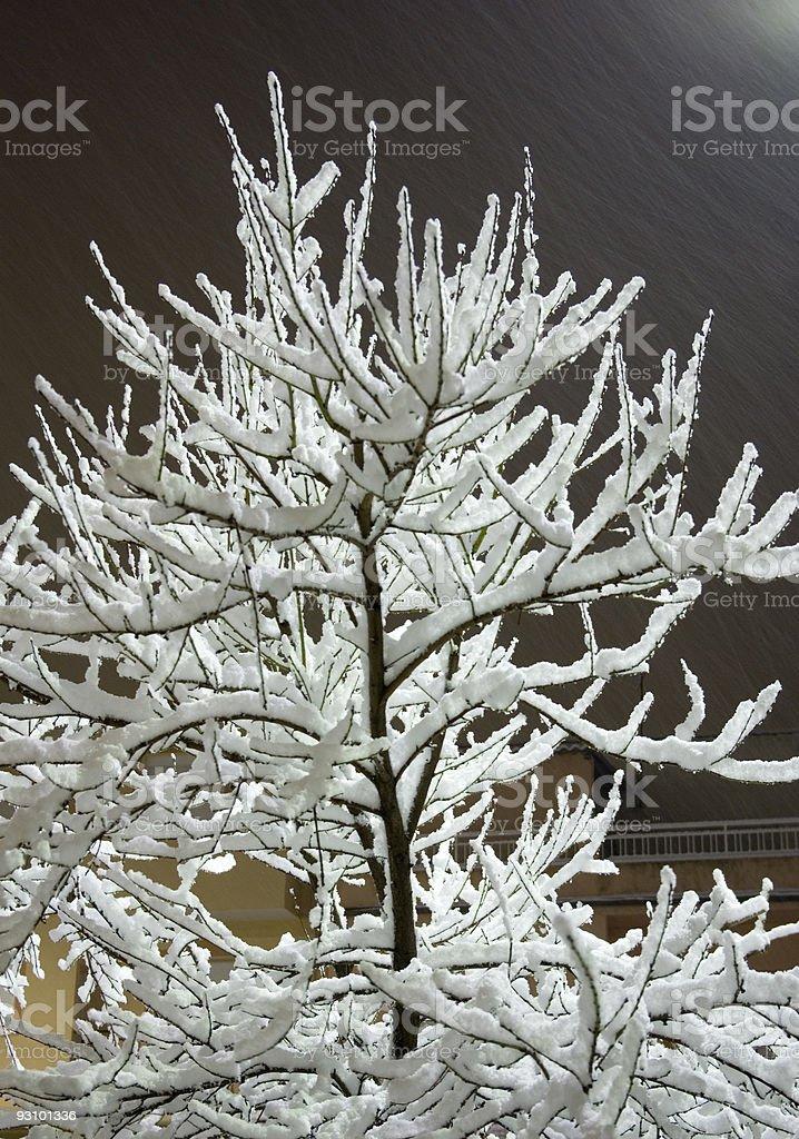 Peach tree in winter. royalty-free stock photo