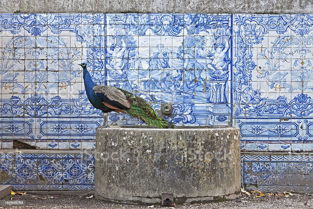 Peacock and tiles stock photo