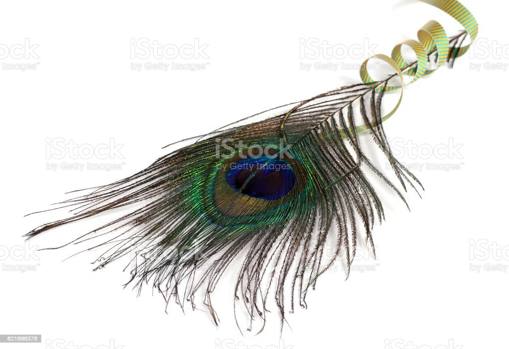Peacock feather and green ribbon stock photo