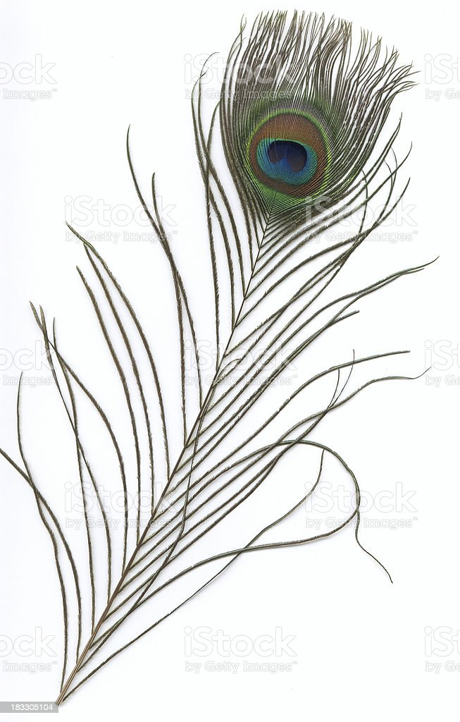 peacock feather b royalty-free stock photo
