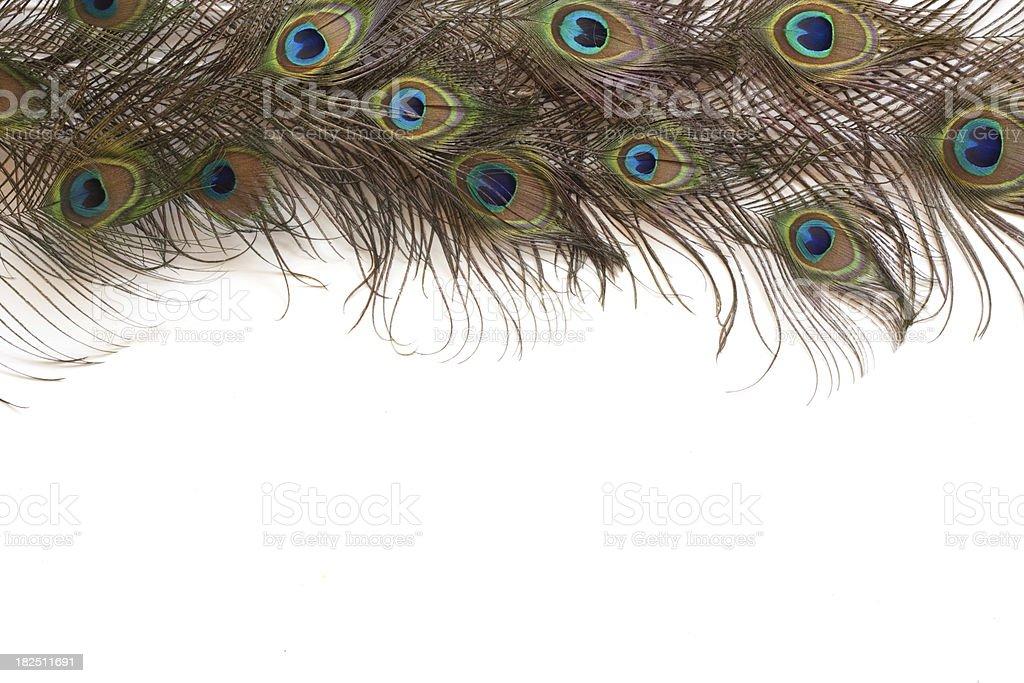Peacock Feather Border stock photo