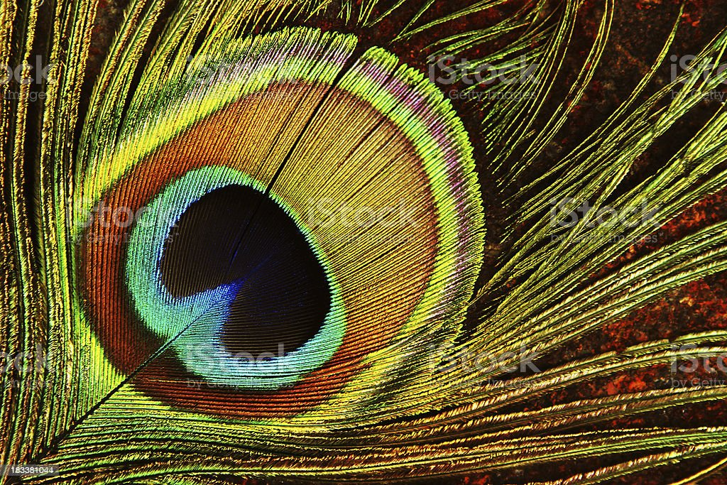 Peacock Feather Eye royalty-free stock photo