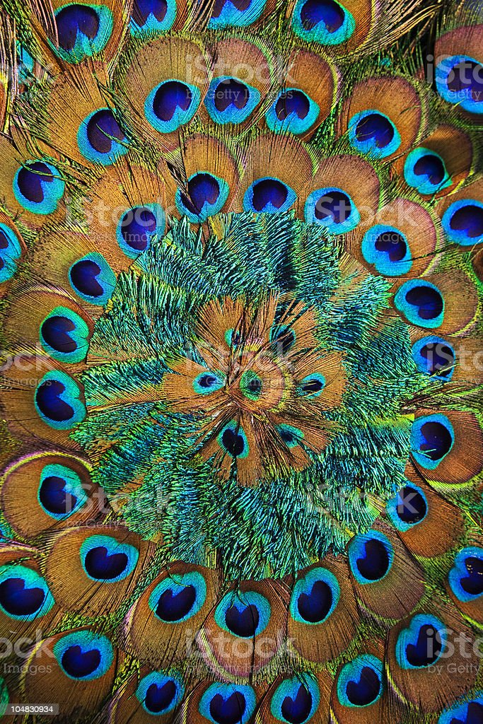 Peacock feather fan circle stock photo
