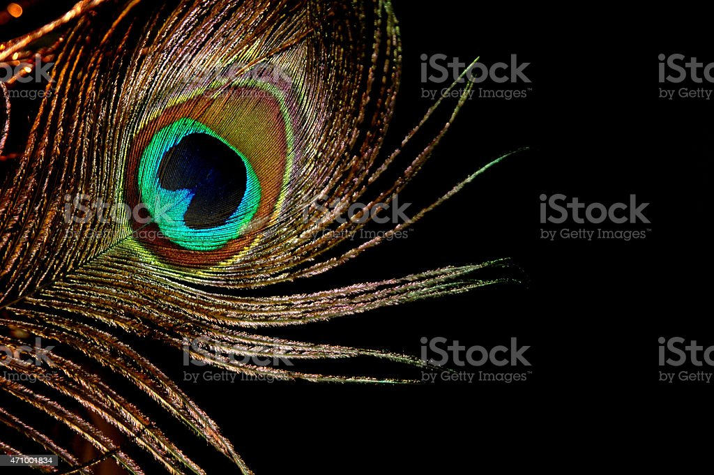 peacock feather gold stock photo