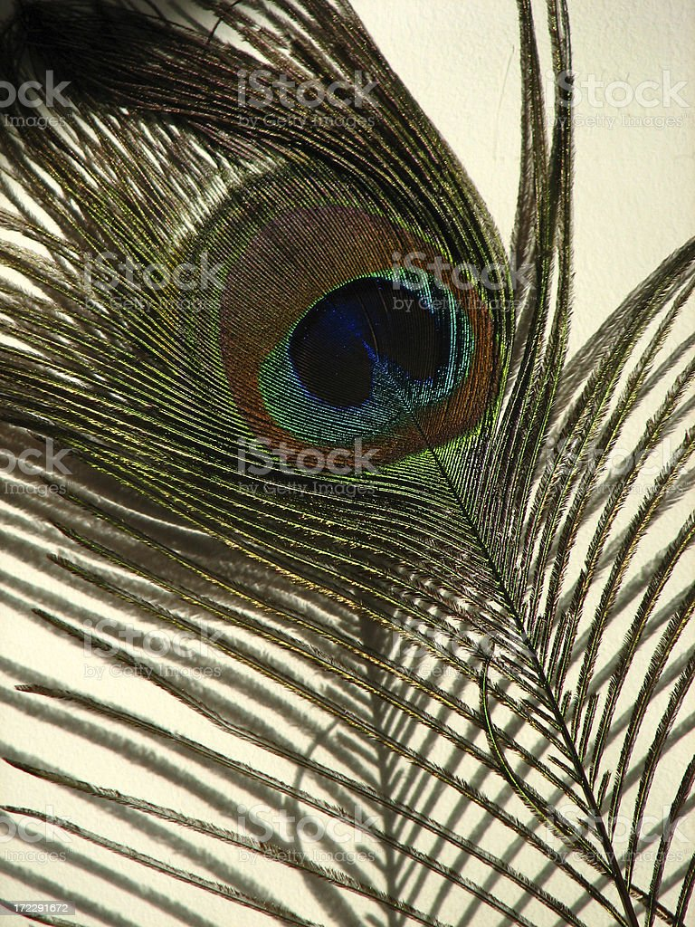 peacock feather Lizenzfreies stock-foto