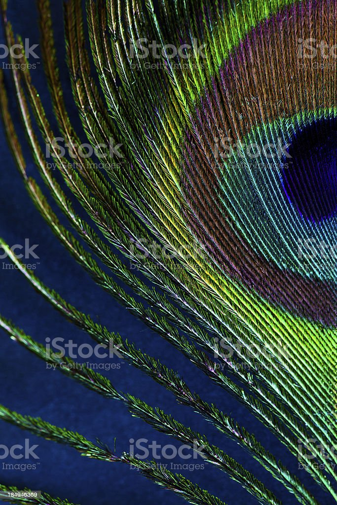 Peacock feather royalty-free stock photo