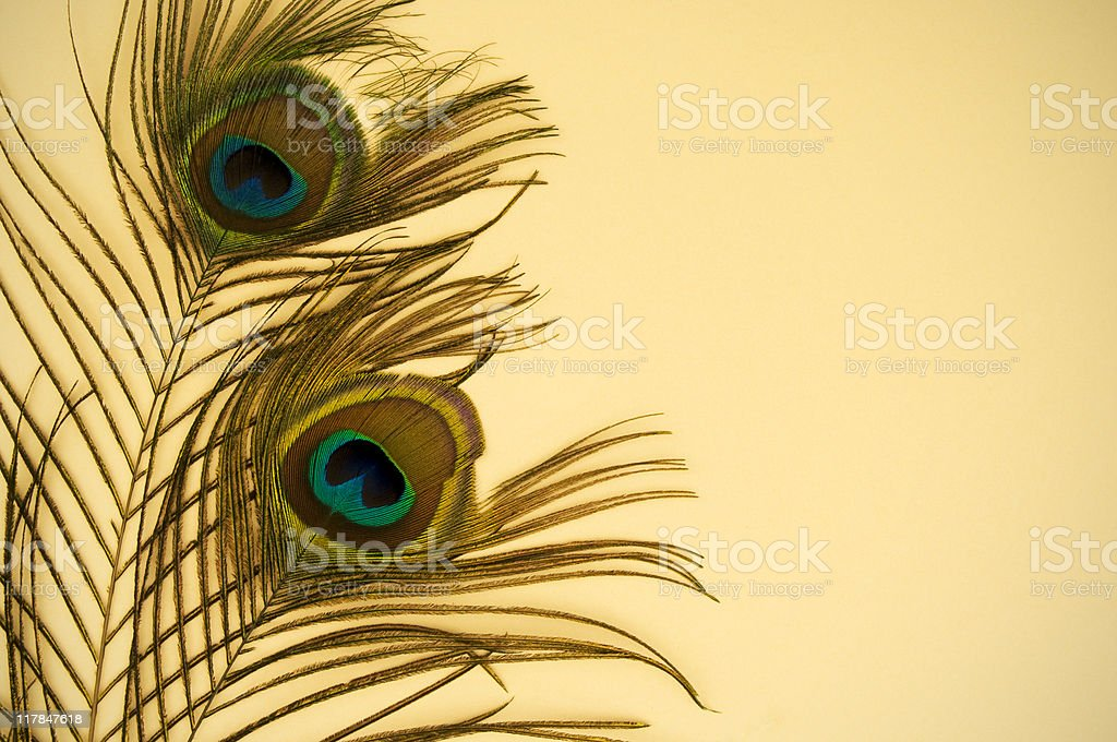 peacock feathers on beige paper stock photo