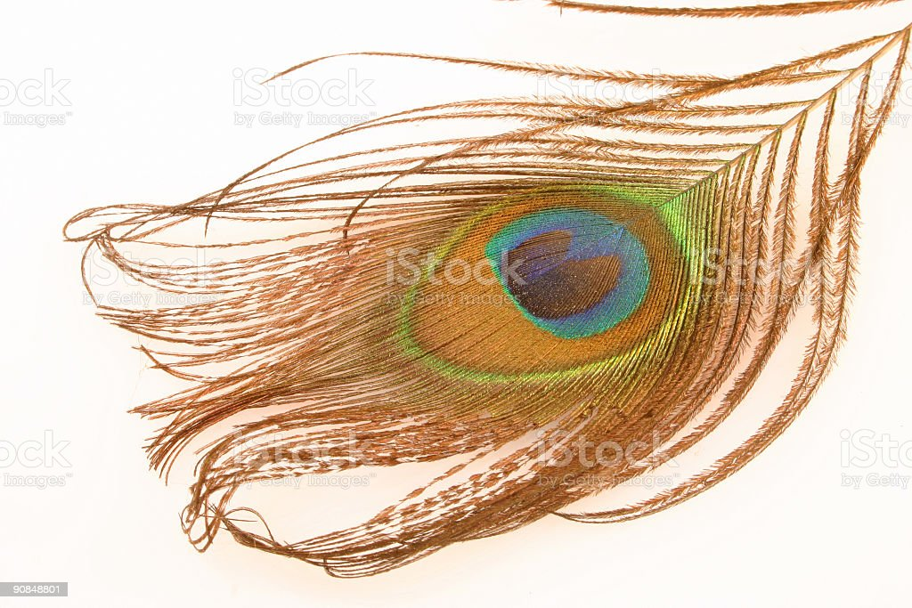 peacock\\'s beautiful feather royalty-free stock photo
