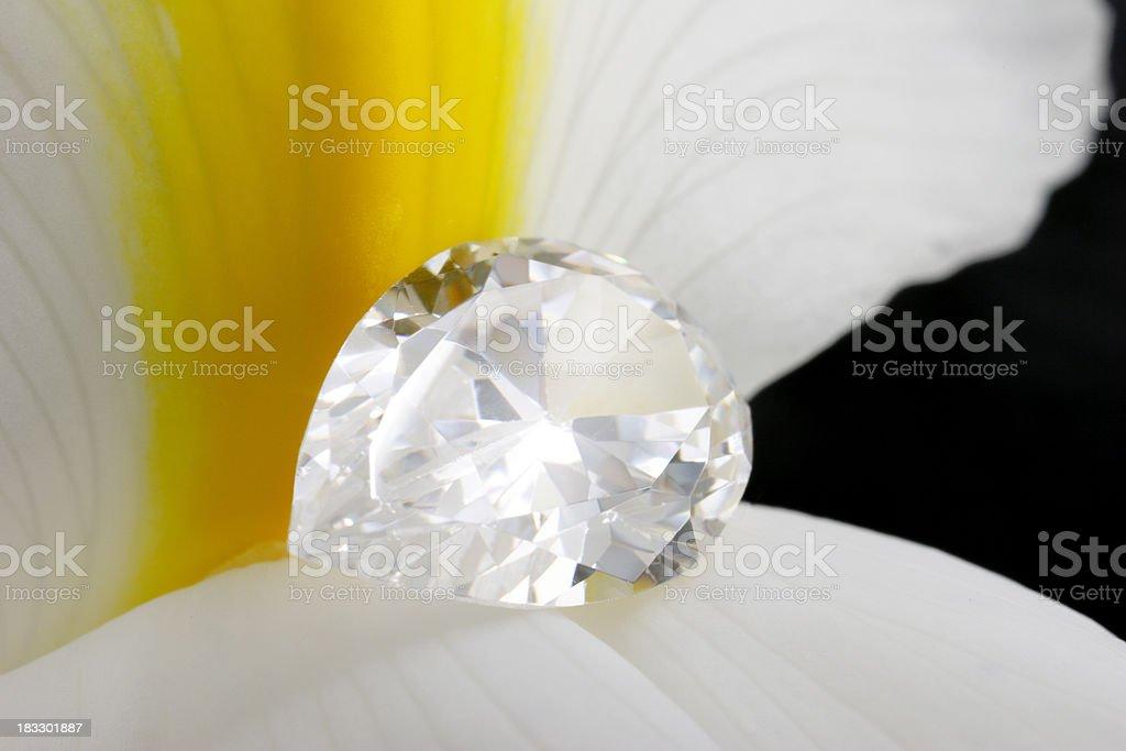 Pear Loose Diamond on Iris Flower stock photo