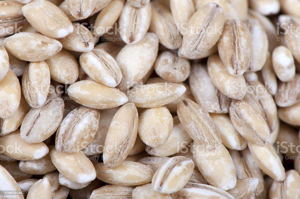 Pearl barley royalty-free stock photo
