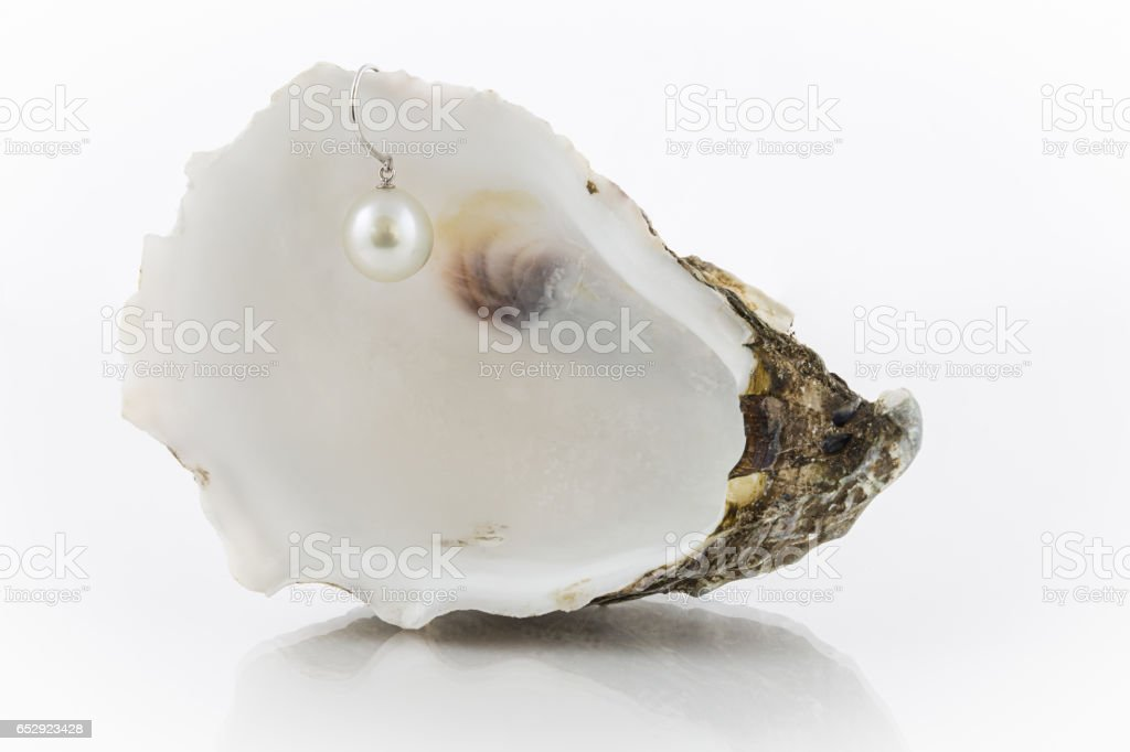 Pearl earring in shell stock photo