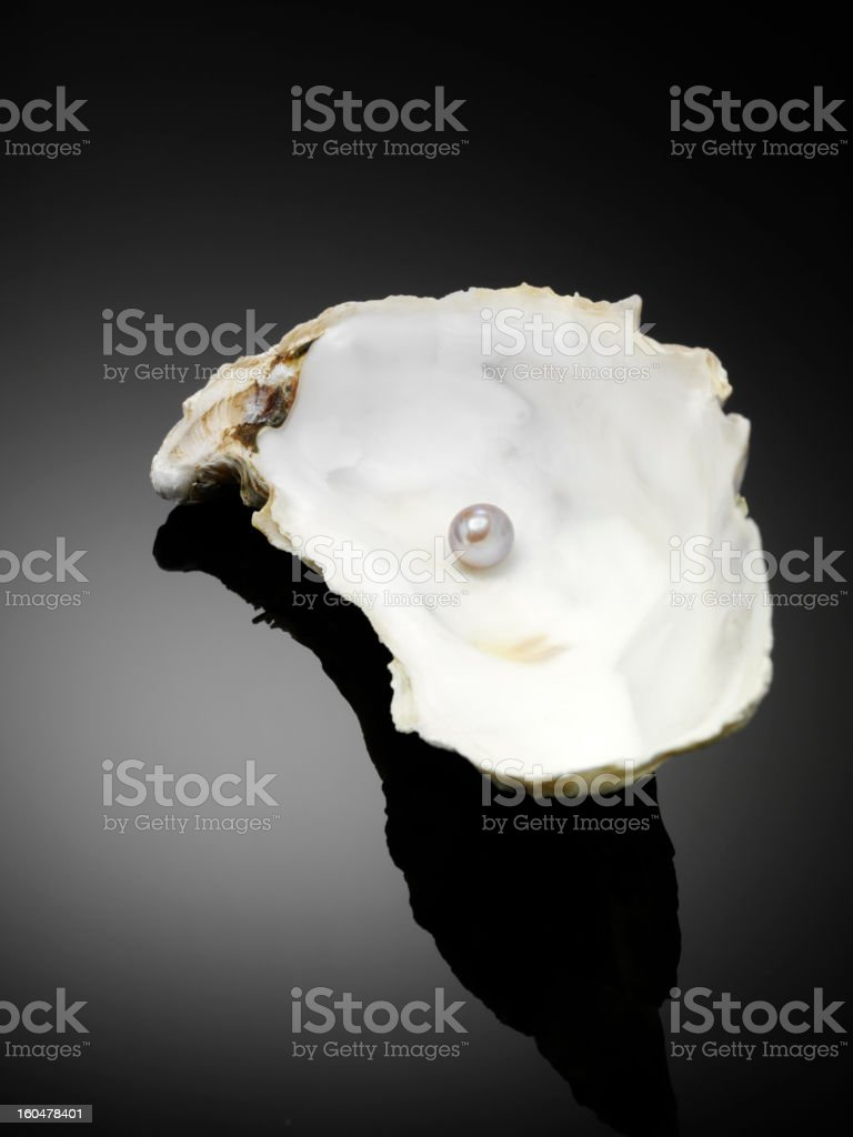Pearl in a  Oyster Shell stock photo