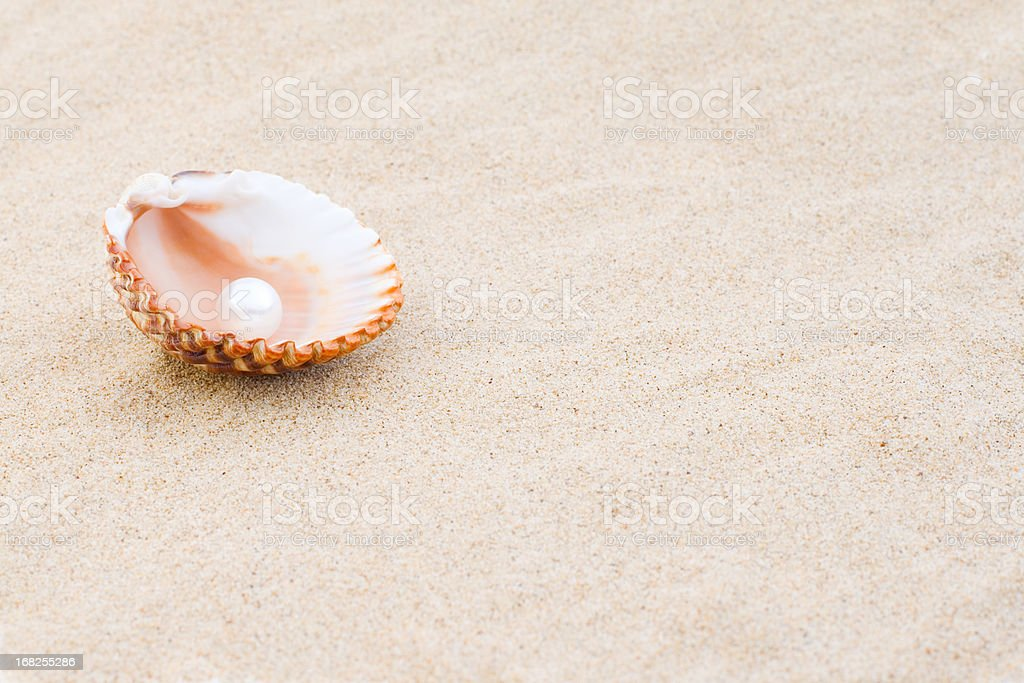 Pearl in a sea shell stock photo