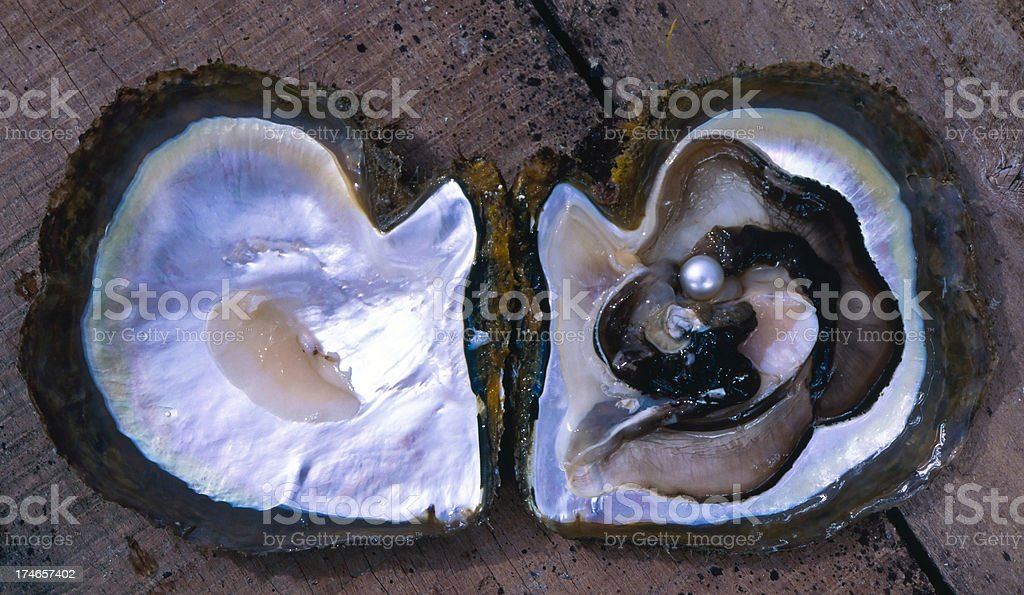 Pearl in a shell royalty-free stock photo