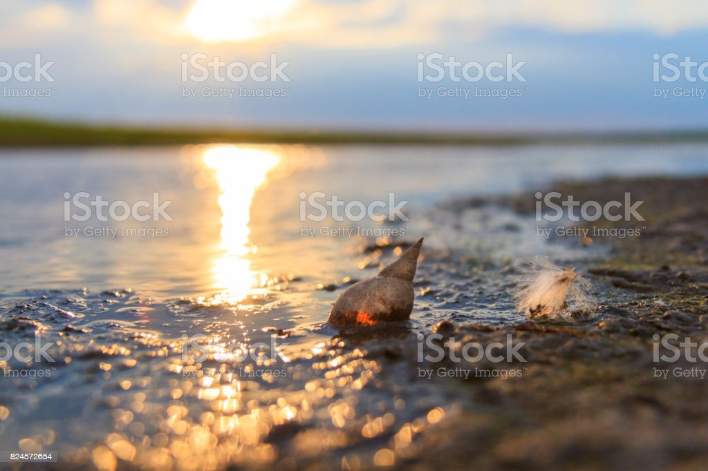 pearl in a swamp, a shell and a fluff on the shore of a lake stock photo