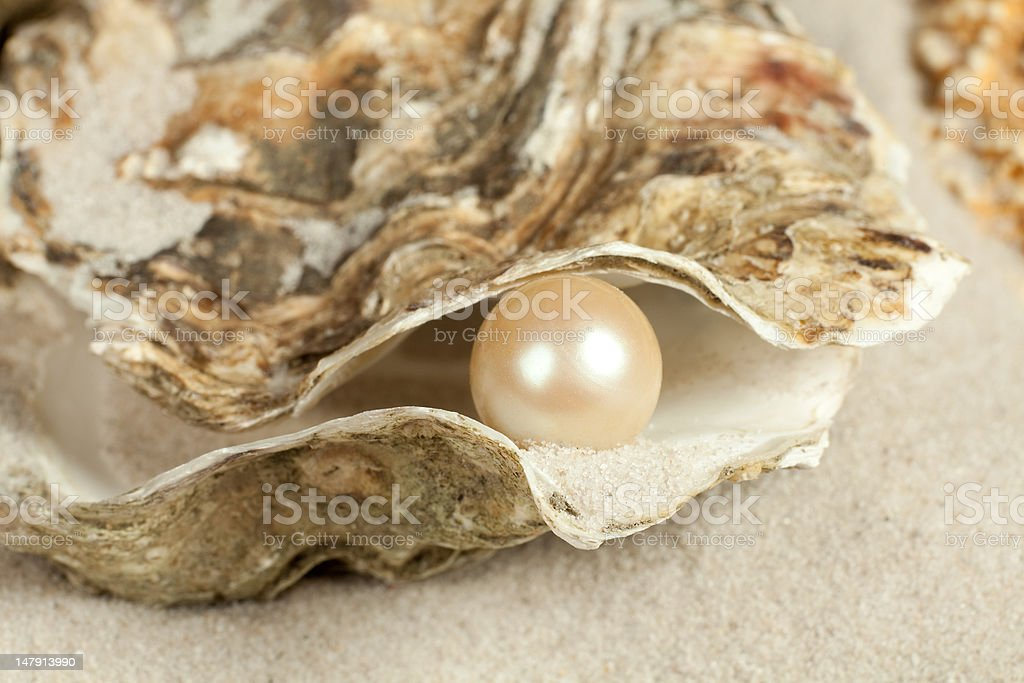 Pearl in oyster stock photo