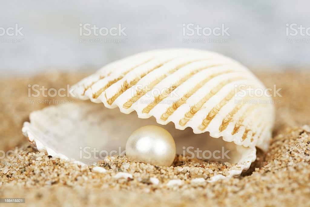 Pearl in shell stock photo