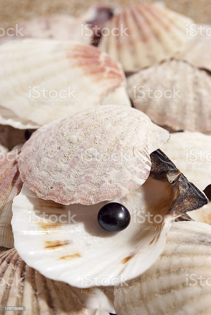 pearl on the seashell royalty-free stock photo