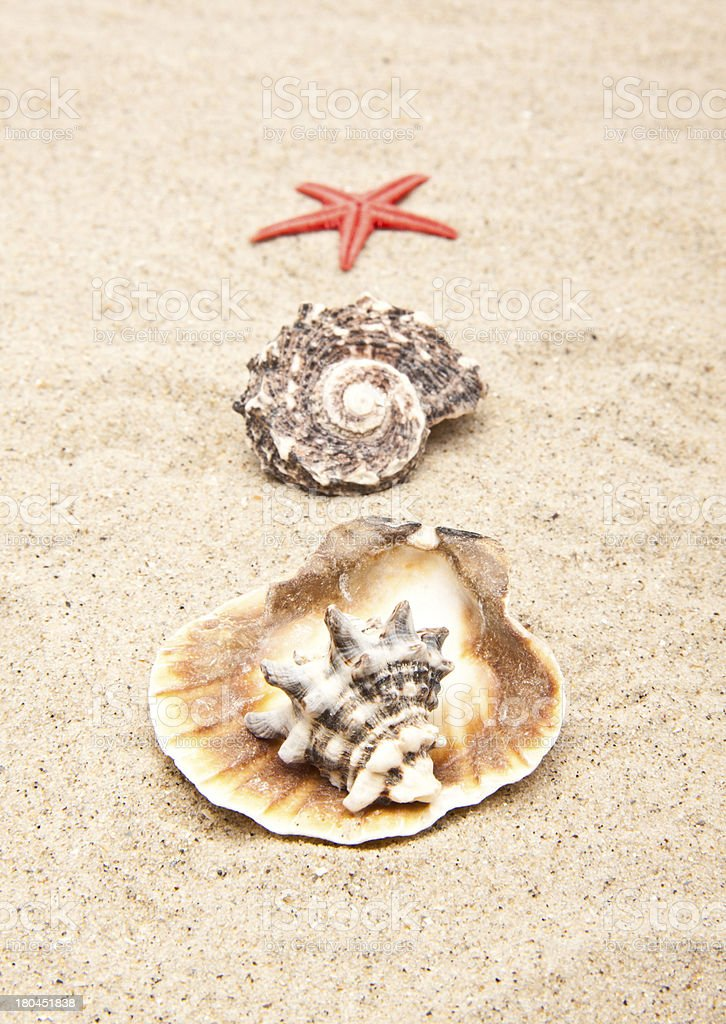 pearl on the seashell royalty-free stock photo