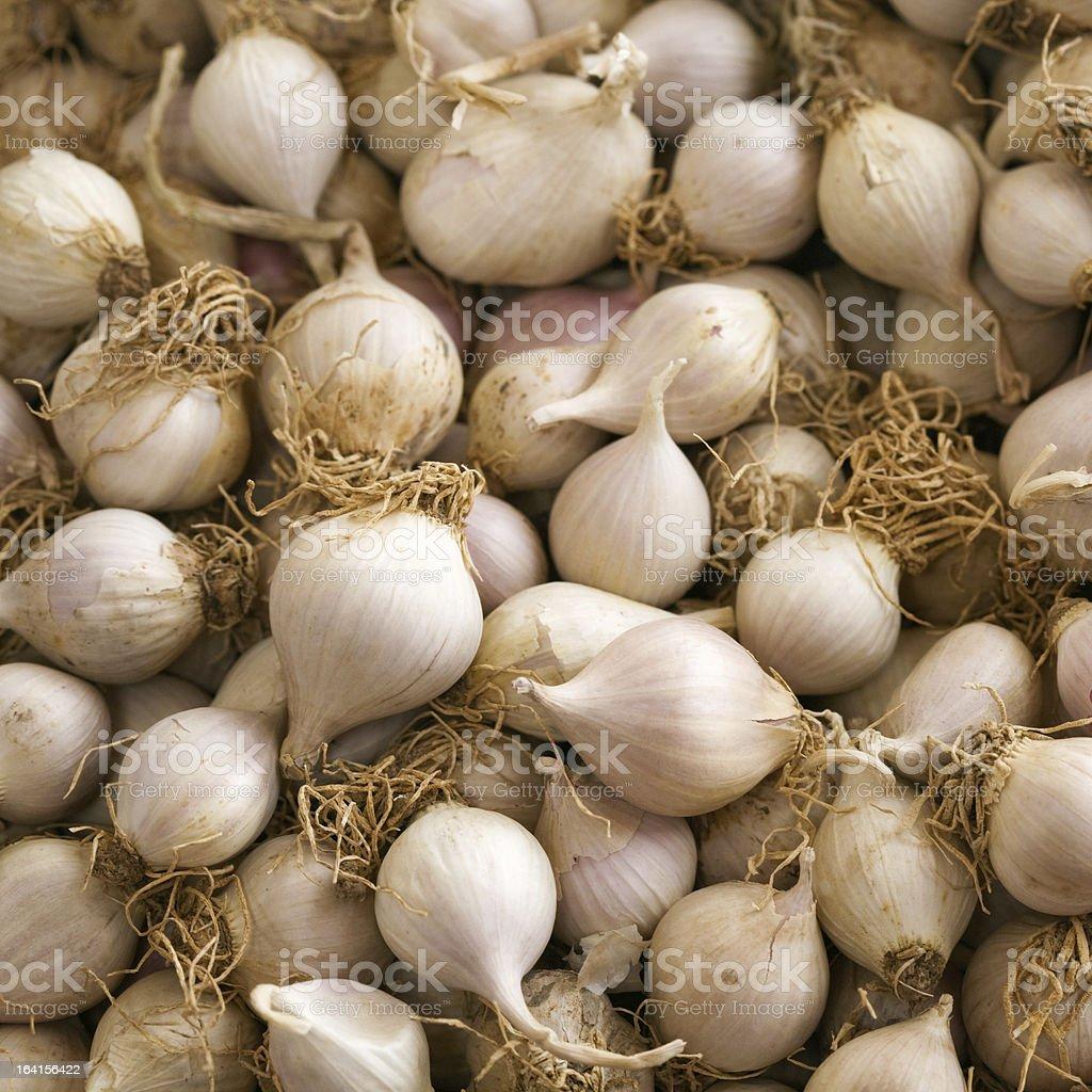 Pearl Onions stock photo