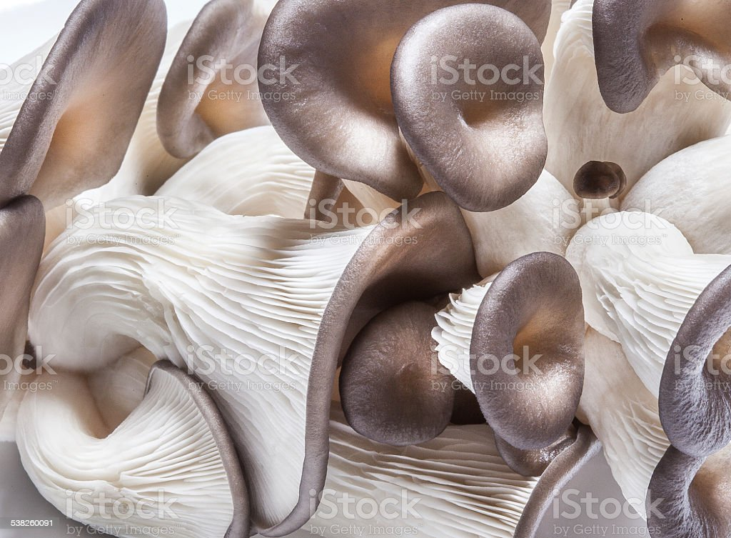 Pearl Oyster Mushrooms closeup stock photo