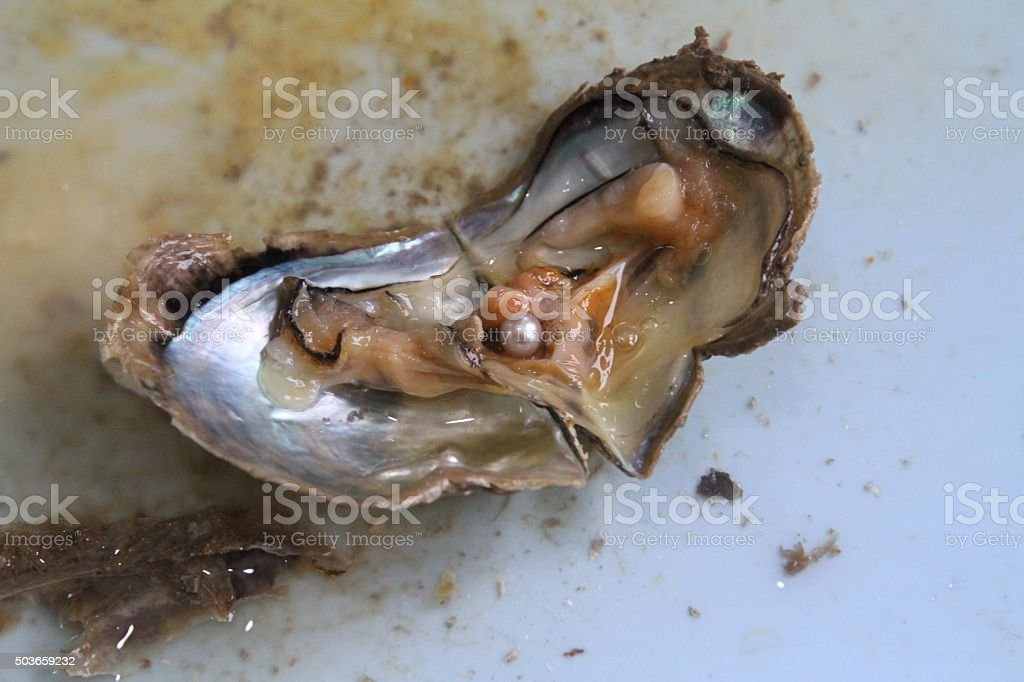 Pearl Oyster stock photo
