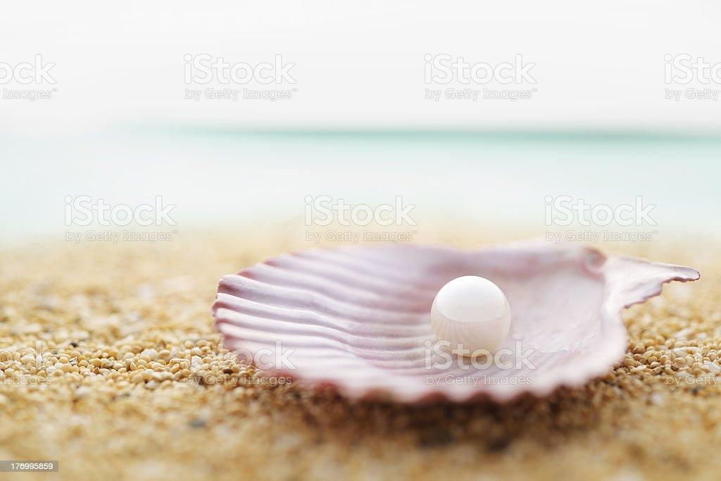 Pearls and seashell stock photo