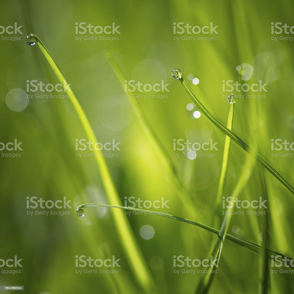 Pearls early in the morning royalty-free stock photo