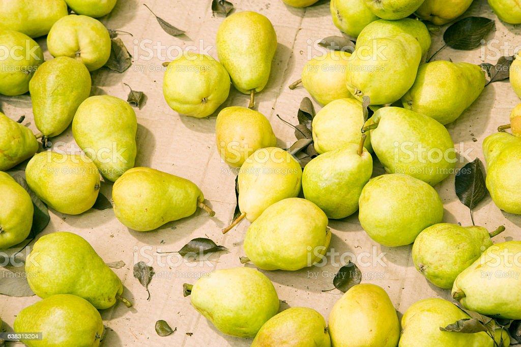 Pears at orchard farm processing facility stock photo