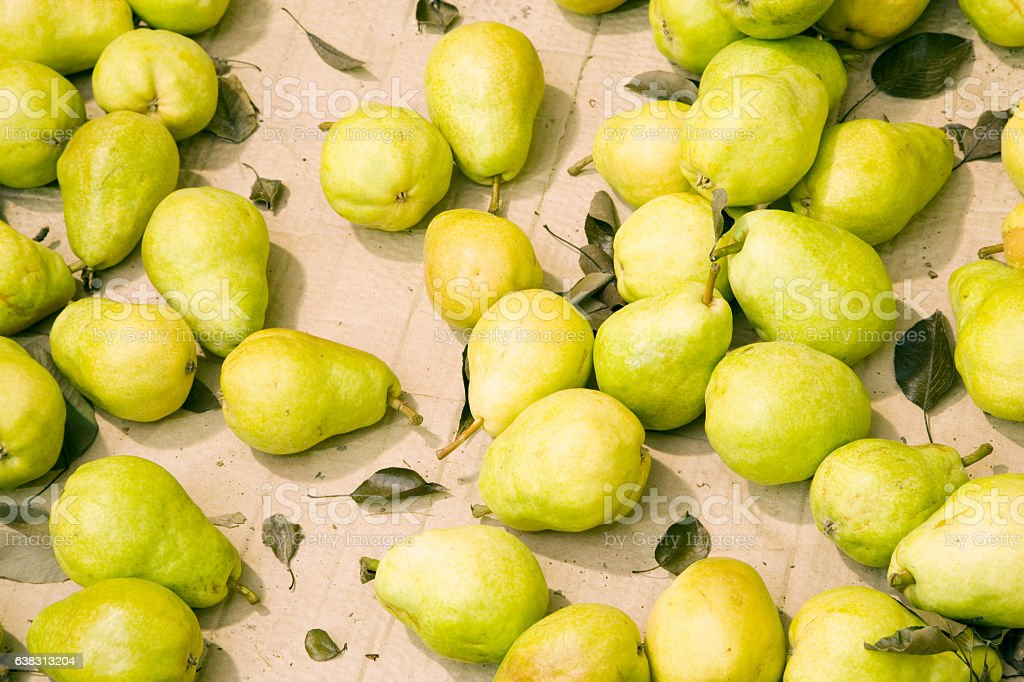 Pears at orchard farm processing facility stock photo